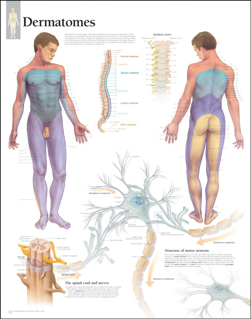 √ Pin Dermatome Chart Printable Welcome On Pinterest within Printable Dermatome Map